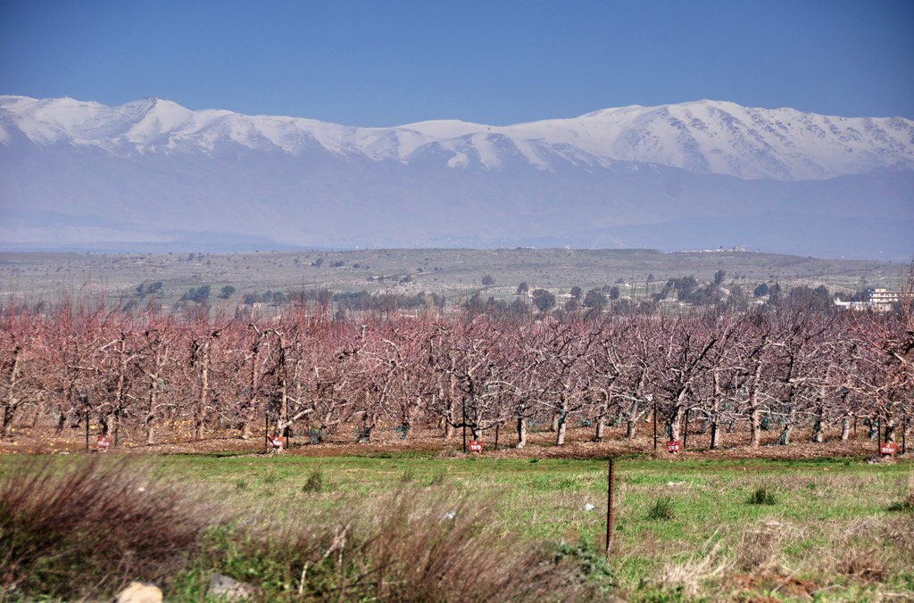 """Mt Hermon (""""Sirion"""") as seen from the Golan Heights"""